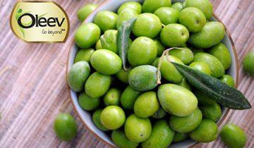 Olive Oil in India
